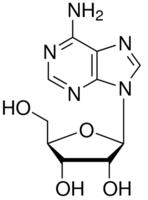 structure of Adenosine CAS 58-61-7